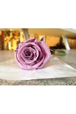 Rose éternelle Lilas